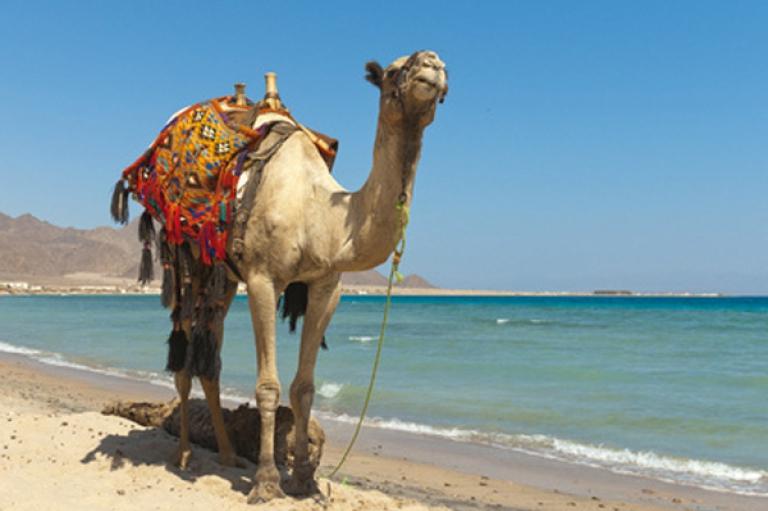 Roulette Paradise Friends Aurora Oriental Sharm/paradise Friends Radisson Blu Resort Sharm El S. Hai